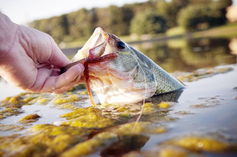 bass fishing techniques