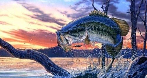 Fall bass fishing
