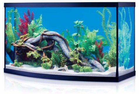 setup a fish tank
